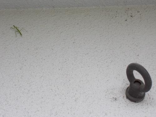 mantis2.jpg